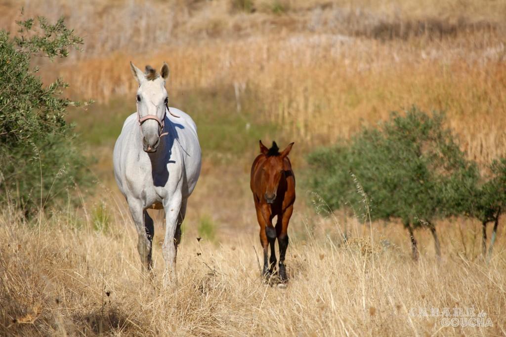 cavalos19