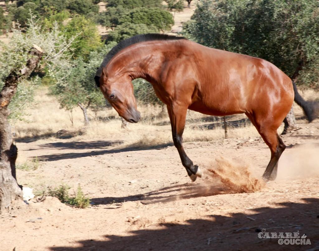 cavalos21