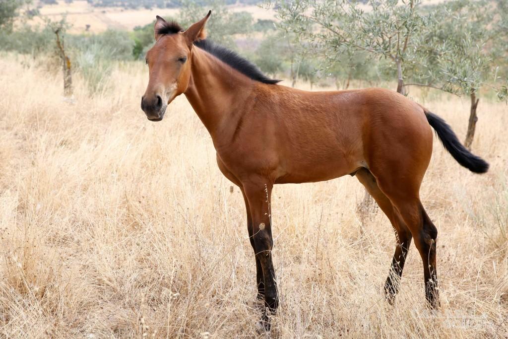 cavalos22